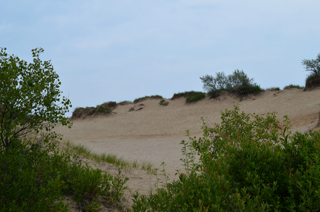 dunes and trees 3