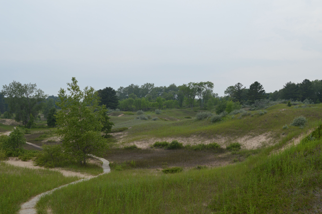 dunes and trees 4